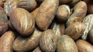 Bitter Kola Nut Benefits